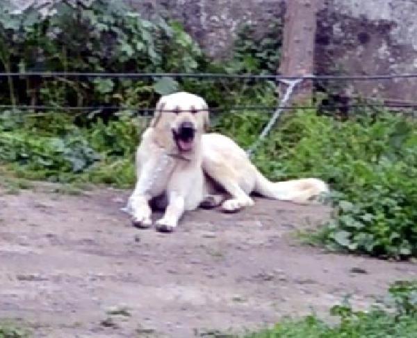 """köpek KÖPEĞE TECAVÜZ İDDİASI """"YOK ARTIK"""" DEDİRTTİ… bodrum da kopege tecavuz iddiasi 2"""