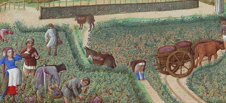 bodrum kalesi  crop specialization