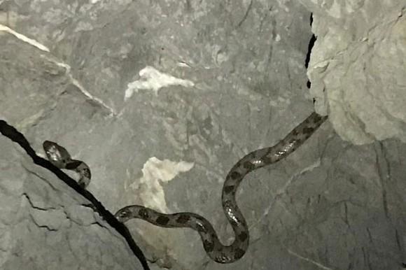 kedi gözlü yılan KEDİ GÖZLÜ YILAN BODRUM'U ŞAŞIRTTI… bodrumlu amator balikci kedi gozlu yilan