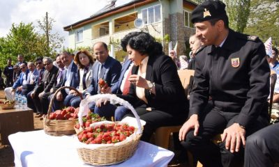 muğla valisi İLK ÇİLEK HASADINI VALİ CİVELEK YAPTI…   ilek hasad   400x240