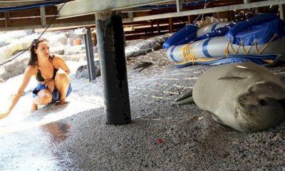 akdeniz foku AKDENİZ FOKUNU ZABITAYA ŞİKAYET ETTİLER… akdeniz foku bodrum 400x240