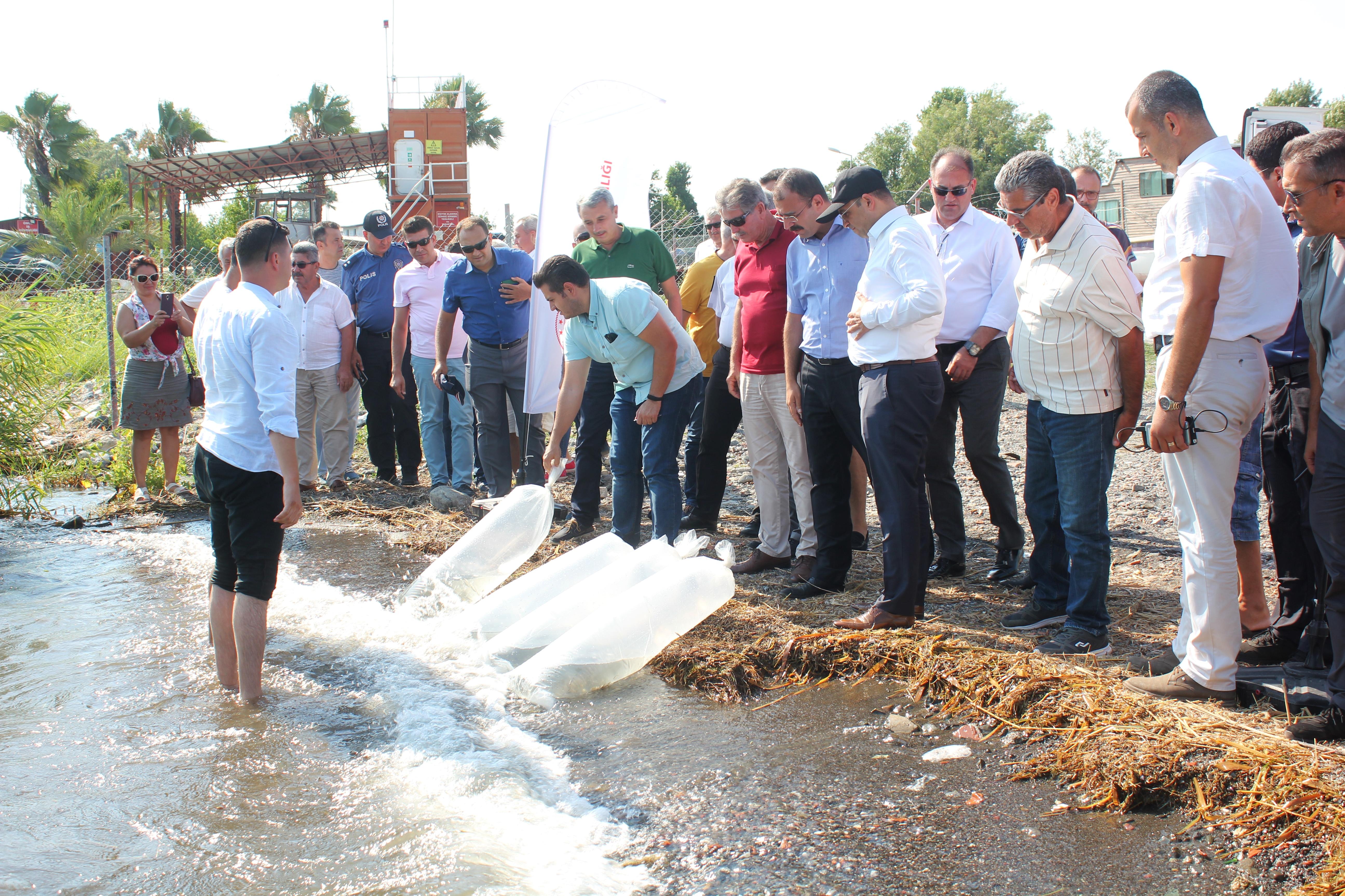 köyceğiz gölü KÖYCEĞİZ GÖLÜ'NE 180 BİN YAVRU SAZAN BIRAKILDI… koycegiz golu 1