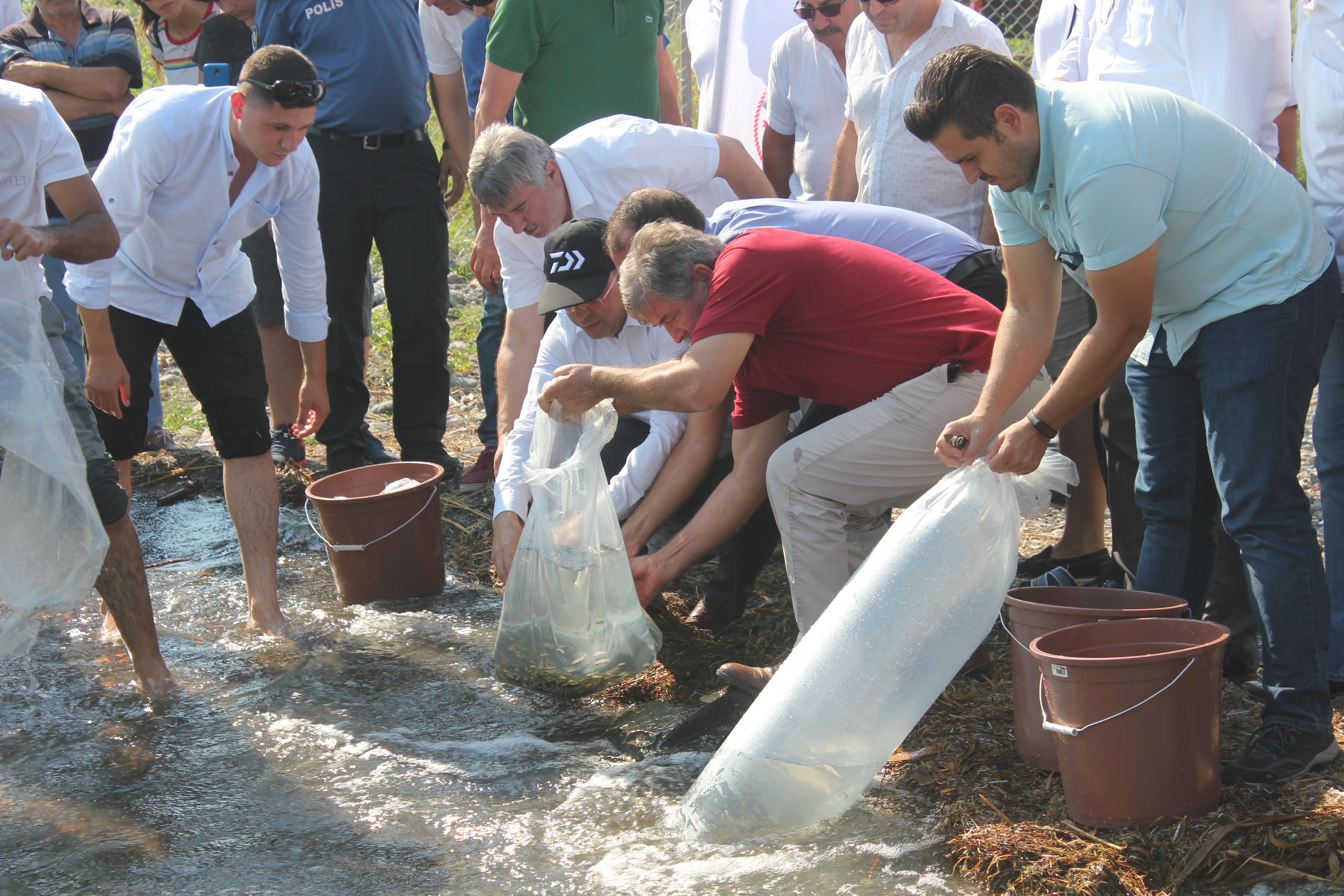 köyceğiz gölü KÖYCEĞİZ GÖLÜ'NE 180 BİN YAVRU SAZAN BIRAKILDI… koycegiz golu 2