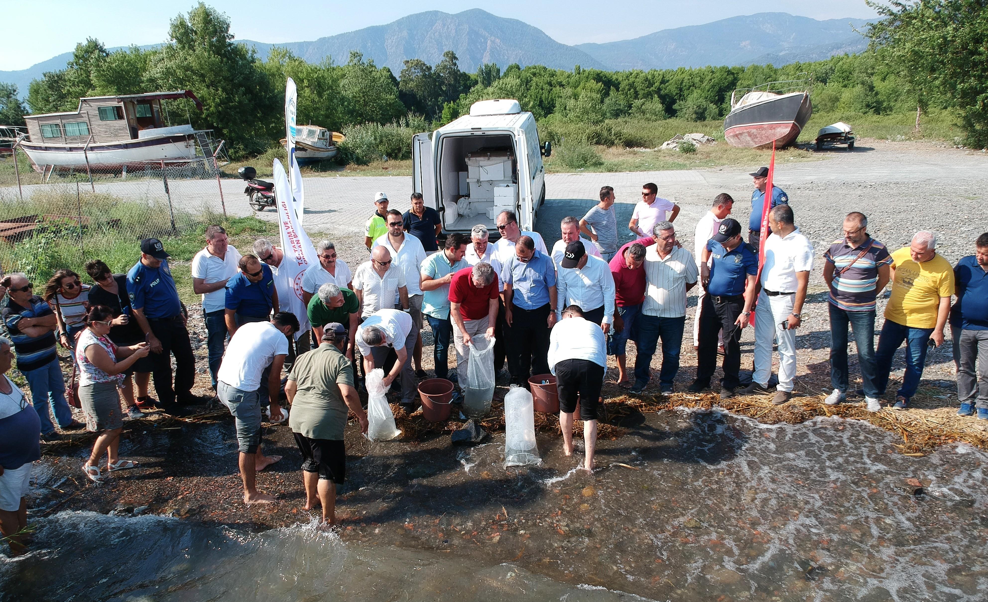 köyceğiz gölü KÖYCEĞİZ GÖLÜ'NE 180 BİN YAVRU SAZAN BIRAKILDI… koycegiz golu 3
