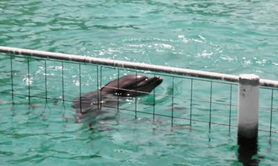 bodrum yunus parkı 65 BİN KİŞİ TEK SES OLDU: YUNUS PARKI KAPATILSIN… Bodrum Dolphin Park 400x240