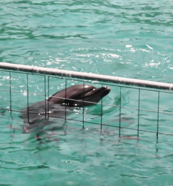bodrum yunus parkı 65 BİN KİŞİ TEK SES OLDU: YUNUS PARKI KAPATILSIN… Bodrum Dolphin Park 560x600
