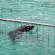 bodrum yunus parkı 65 BİN KİŞİ TEK SES OLDU: YUNUS PARKI KAPATILSIN… Bodrum Dolphin Park 80x80