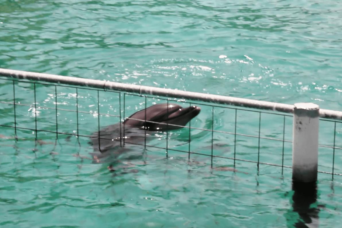 bodrum yunus gösteri merkezi YUNUSLARA ÖZGÜRLÜK SEVİNCİ 24 SAAT SÜRDÜ… Bodrum Dolphin Park