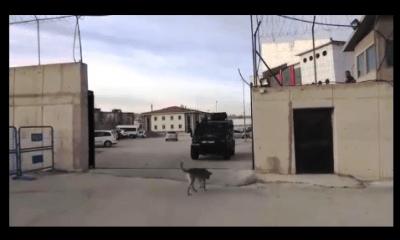 bodrum terörle mücadele ekipleri BODRUM'DA TAKİBE ALDILAR… VAN'DA KURTARDILAR… bodrum van teror 1 400x240