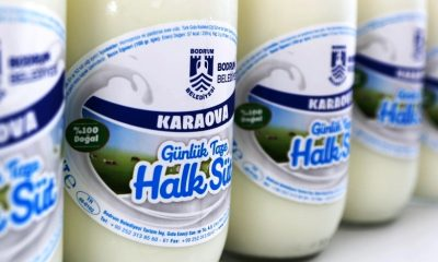 bodrum belediyesi halk süt HALK SÜT TAMAM… SIRADA YOĞURT, KAYMAK VE PEYNİR VAR… karaova halk sut 1 400x240