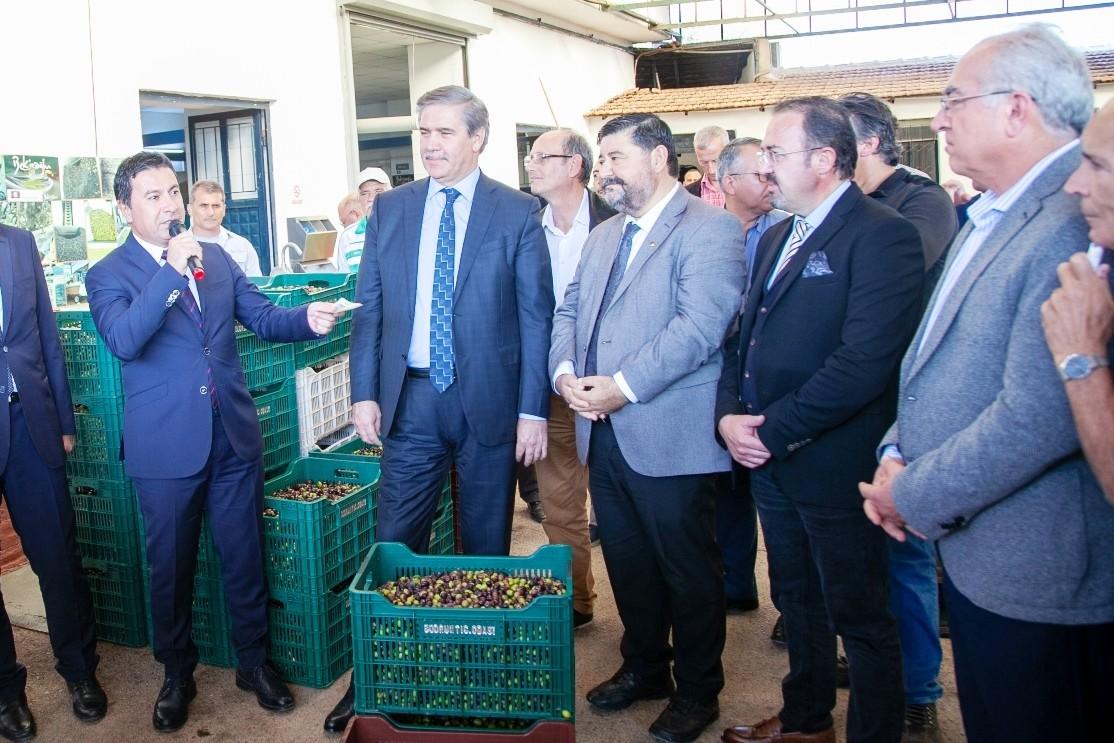 bekiroğlu zeytinyağı fabrikası ZEYTİN ÜRETİCİLERİNE ZEYTİN KASALARI DAĞITILACAK… zeytin kasalari ureticiye dagitildi 1
