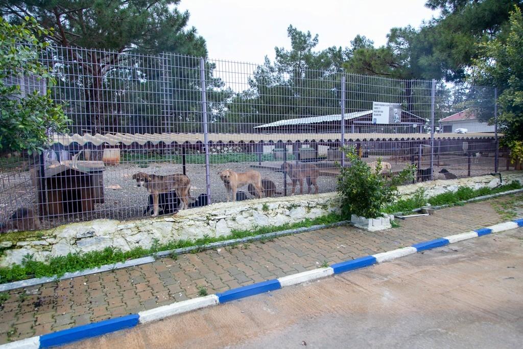 bodrum torba hayvan barınağı 10 Bin sokak hayvanına dijital kimlik… bodrum hayvanlara dijital kimlik 3