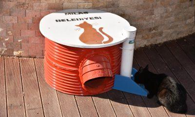 milas belediyesi Milas'ta kedilerin yaşamı artık daha kolay… milas belediyesi sokak hayvanlari barinak 1 400x240