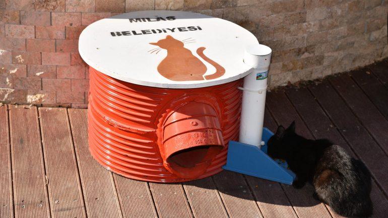 Milas'ta kedilerin yaşamı artık daha kolay…