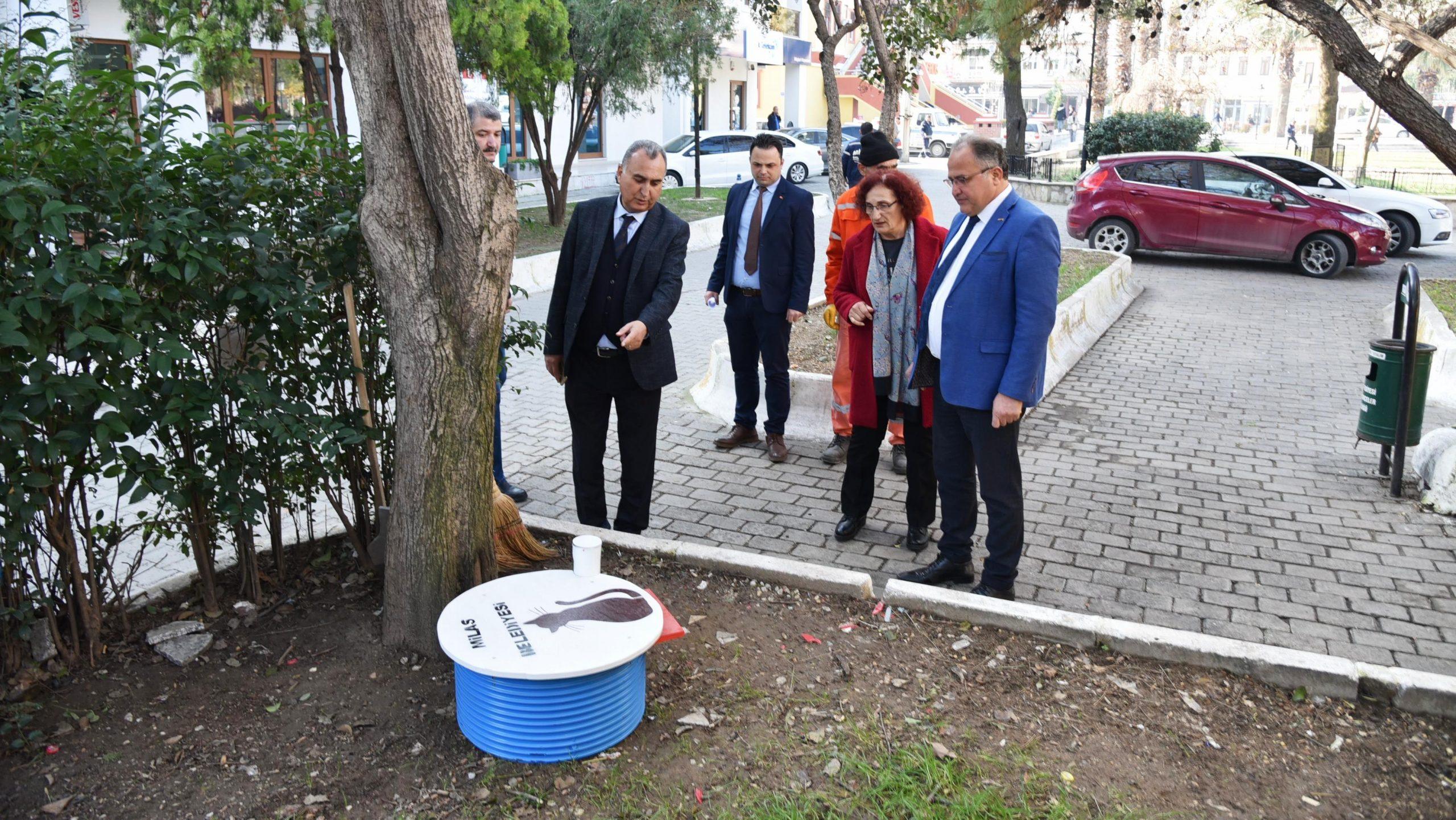 milas belediyesi Milas'ta kedilerin yaşamı artık daha kolay… milas belediyesi sokak hayvanlari barinak 3 scaled
