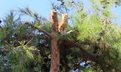 sokak kedisi Belediye ekipleri sokak kedisi için seferber oldu.. sokak kedisi 3 400x240