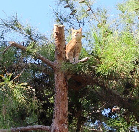 sokak kedisi Belediye ekipleri sokak kedisi için seferber oldu.. sokak kedisi 3 560x533