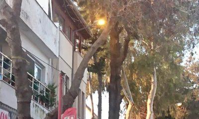 Turgutreis'in sokak lambaları gece sönüp, gündüz yanıyor… turgutreis aydem 1 400x240