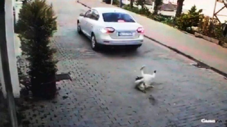 Ezdiği köpeği bırakarak kaçtı…