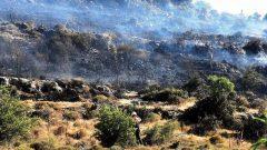 Gürece'de 10 Hektar Alan Yandı…