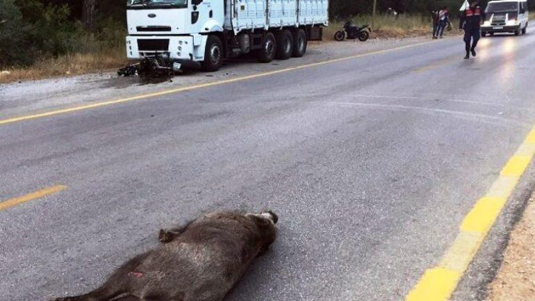 Yola aniden çıkan domuz kazaya sebep oldu…