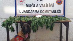 Uyuşturucu Operasyonunda Bir Şüpheli Gözaltında…