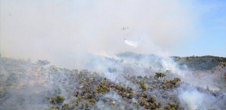 Zeytinlik'teki Yangın Ormana Sıçradı…