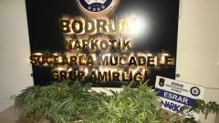 Uyuşturucu Ticareti İddiasıyla 12 Zanlı Tutuklandı…